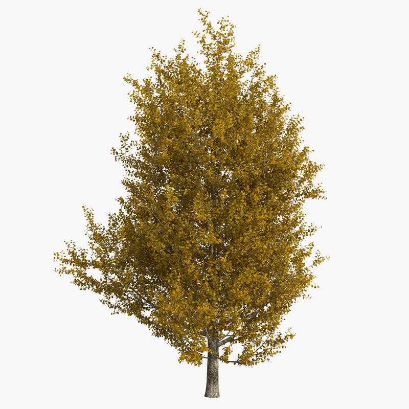max yellow poplar tree