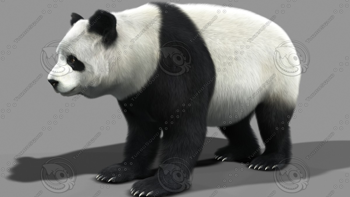Pandra bear teen model business your