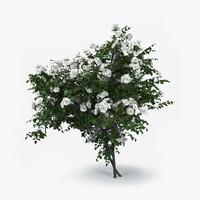 roses bush 3d model