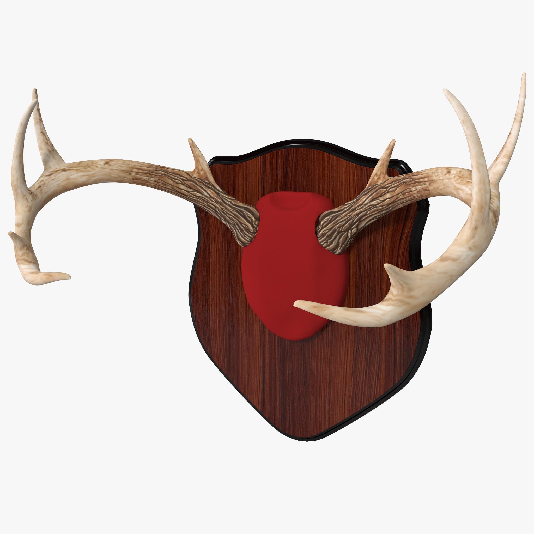 mounted deer antlers 3d model