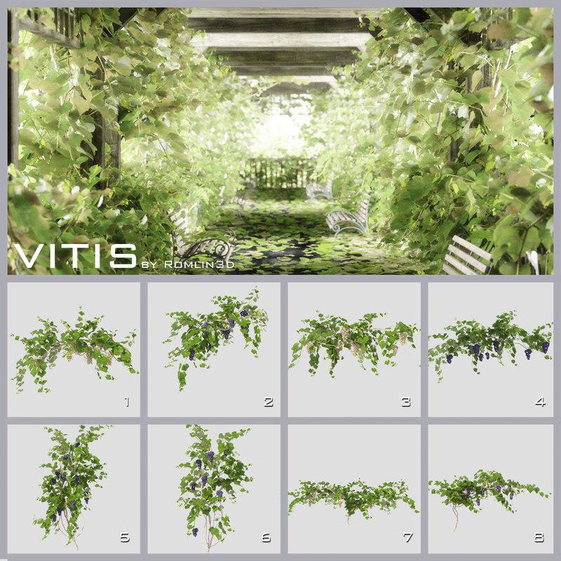c4d grape vines vitis