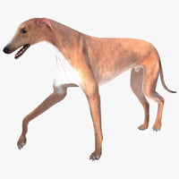 australian greyhound 2 fur 3d model