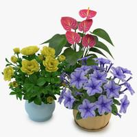 3d flowers pot 02 model