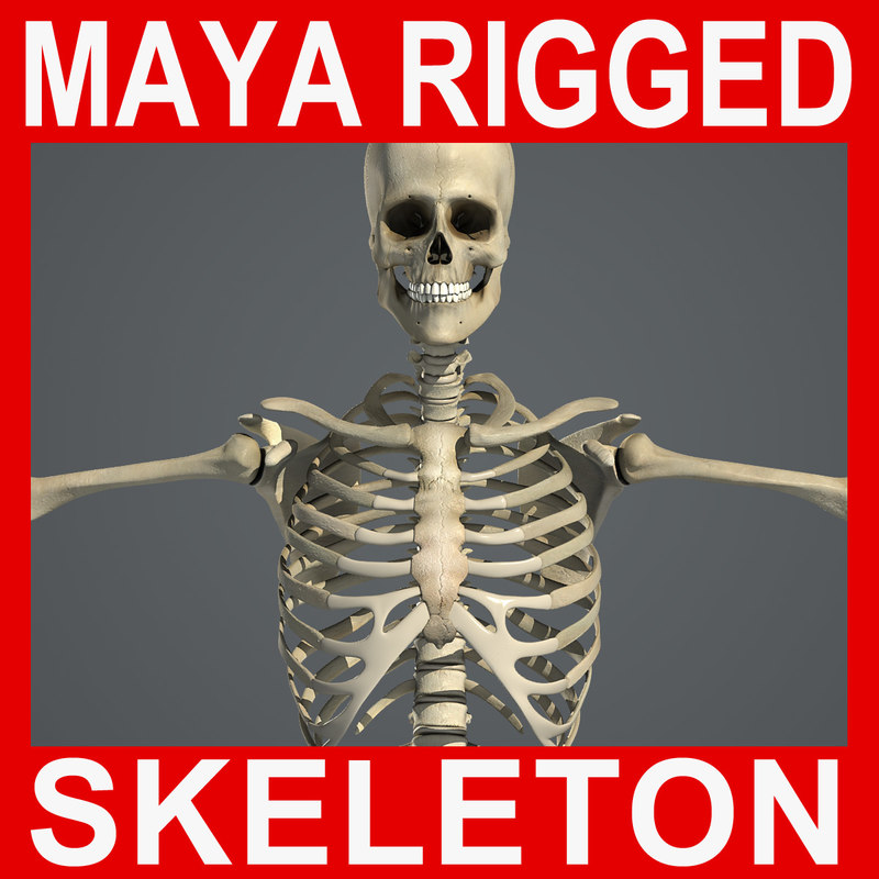 ma human rigged