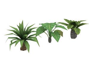 palm tree 3d lwo