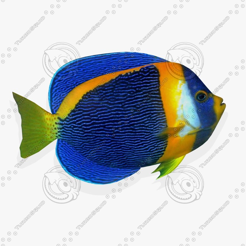 wall tropical fish fg 3d model