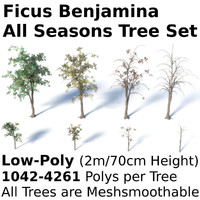 Ficus Benjamina Tree Set
