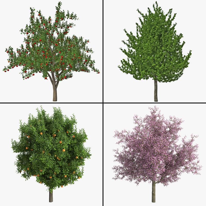 fruit tree 3d max