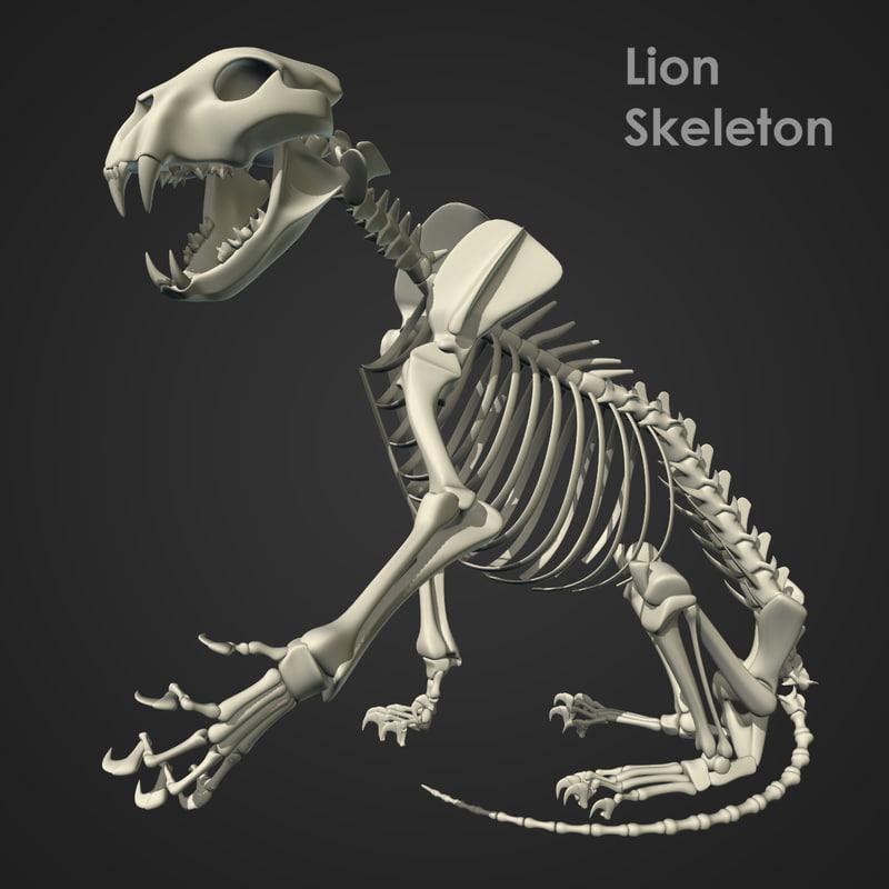 max rigged lion skeleton bones