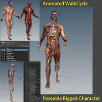 Rigged + Animated Human Anatomy