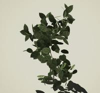 maya plant shrub