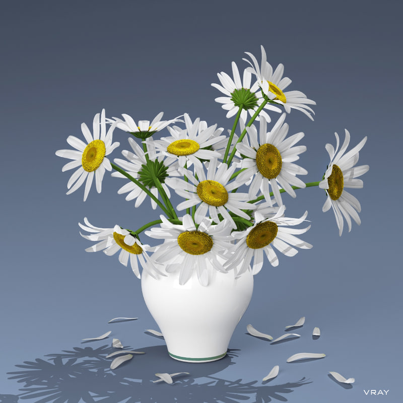 3d model bouquet daisies