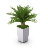 cycas flower 3d max