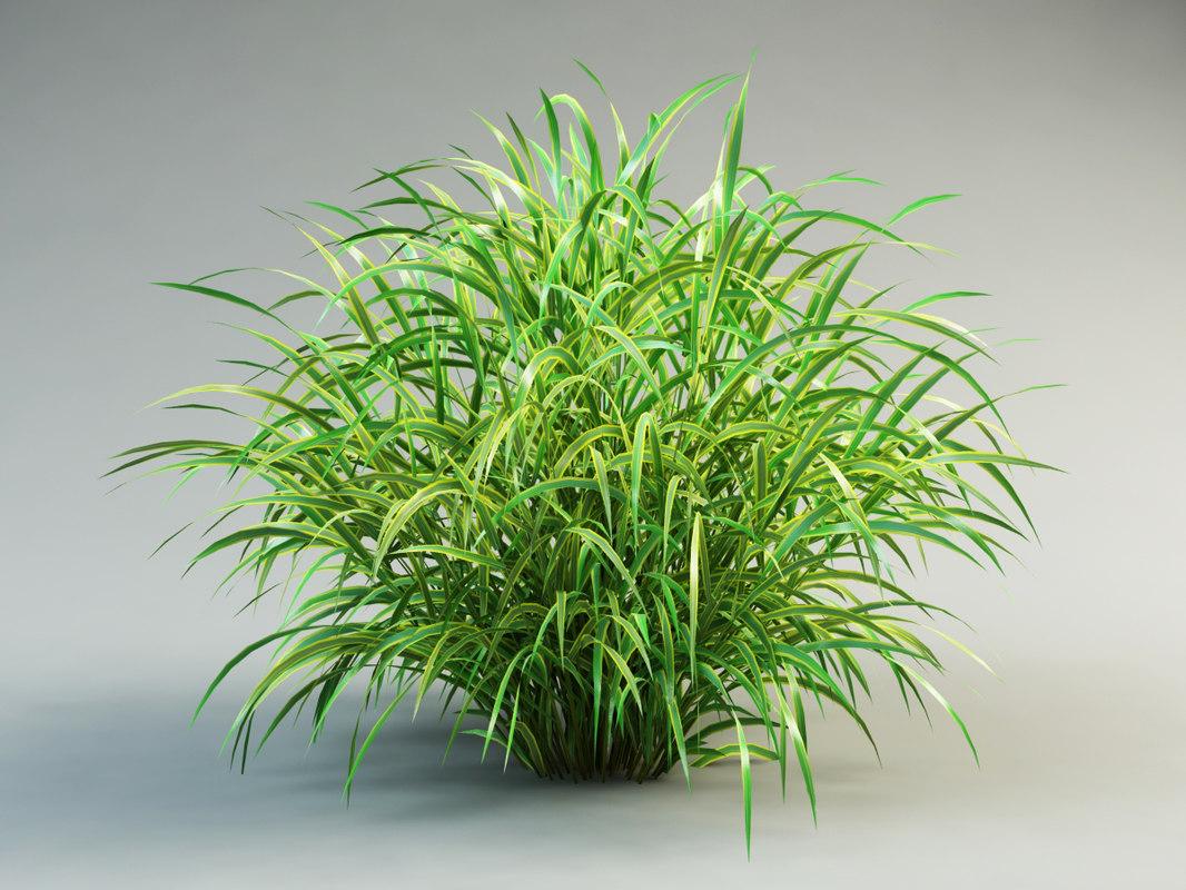 3ds max cordgrass cord-grass