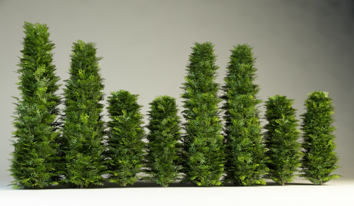 bush hedges 3d model