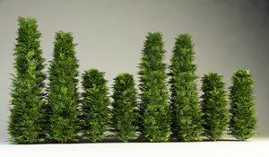 bush hedges 3d model