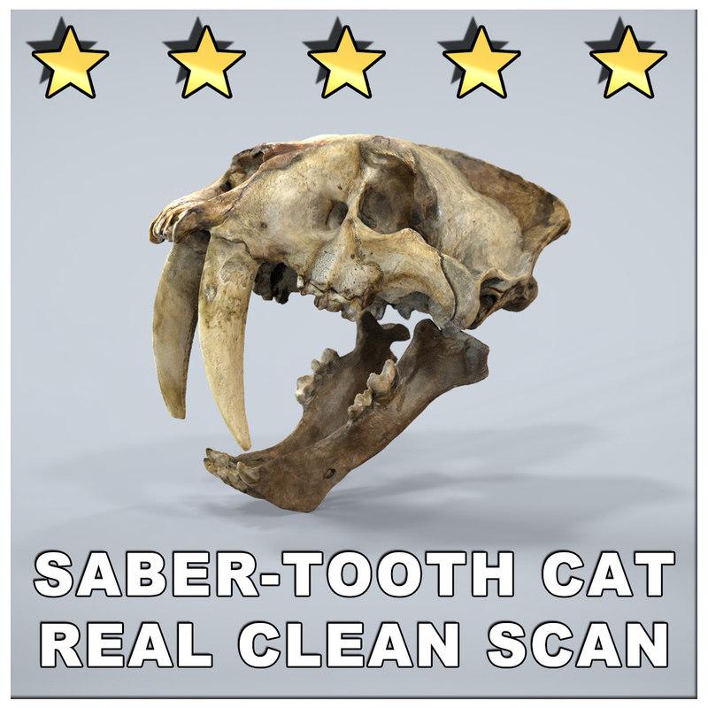 maya smilodon saber cat skull