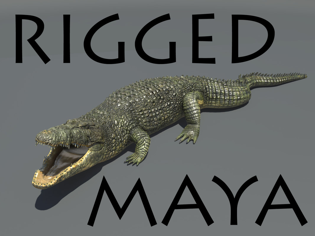 3d realistic crocodile rigged model
