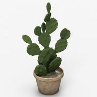max realistic cactus