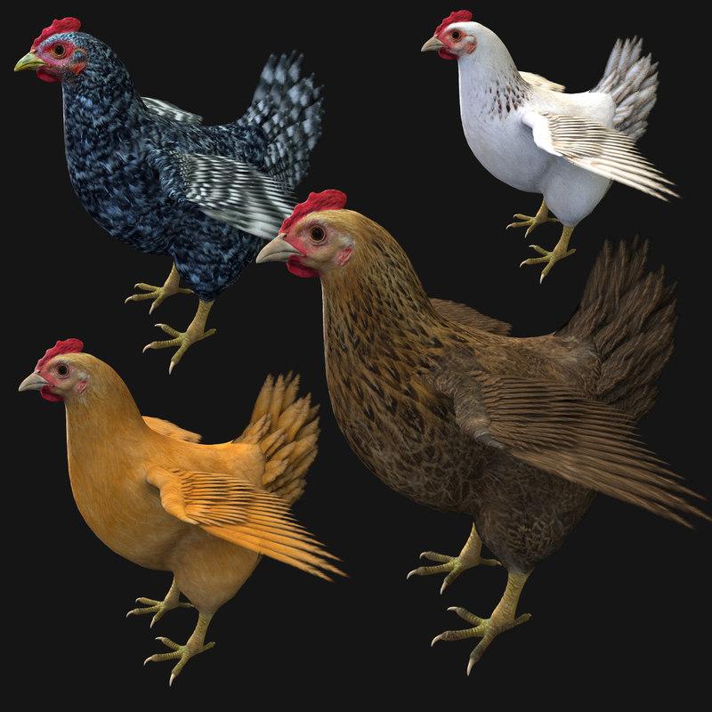 chicken v 2 3d max