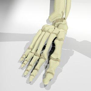 foot bone 3d 3ds