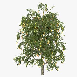pear tree max