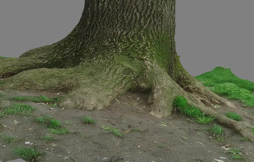 tree trunk 1 3d model