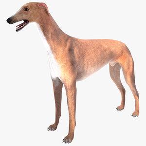 australian greyhound fur 3d max