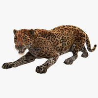 Jaguar Pose 3 Fur