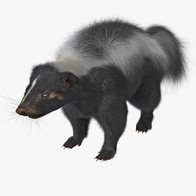 skunk rigged fur 3d max