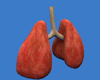 lungs respiratory 3ds