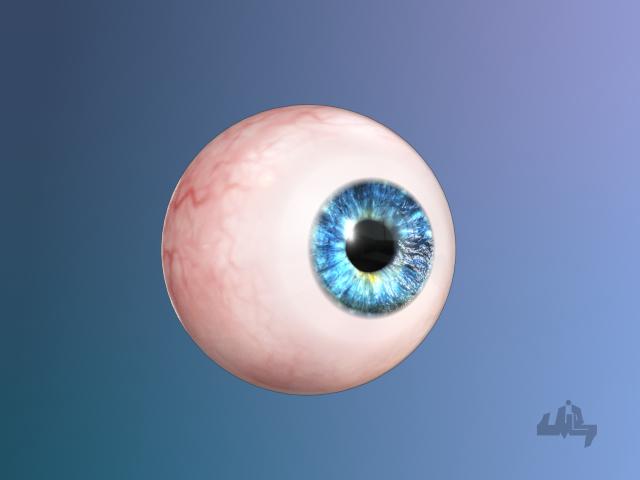 3d eyeball eye model