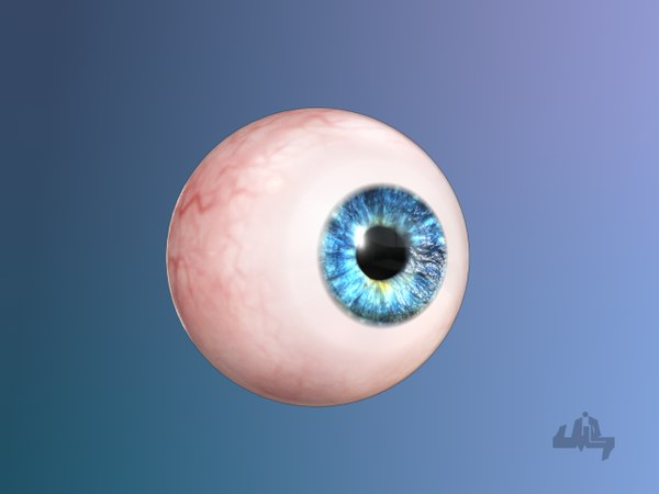 3d eyeball eye model
