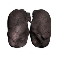 3d model smoker lung