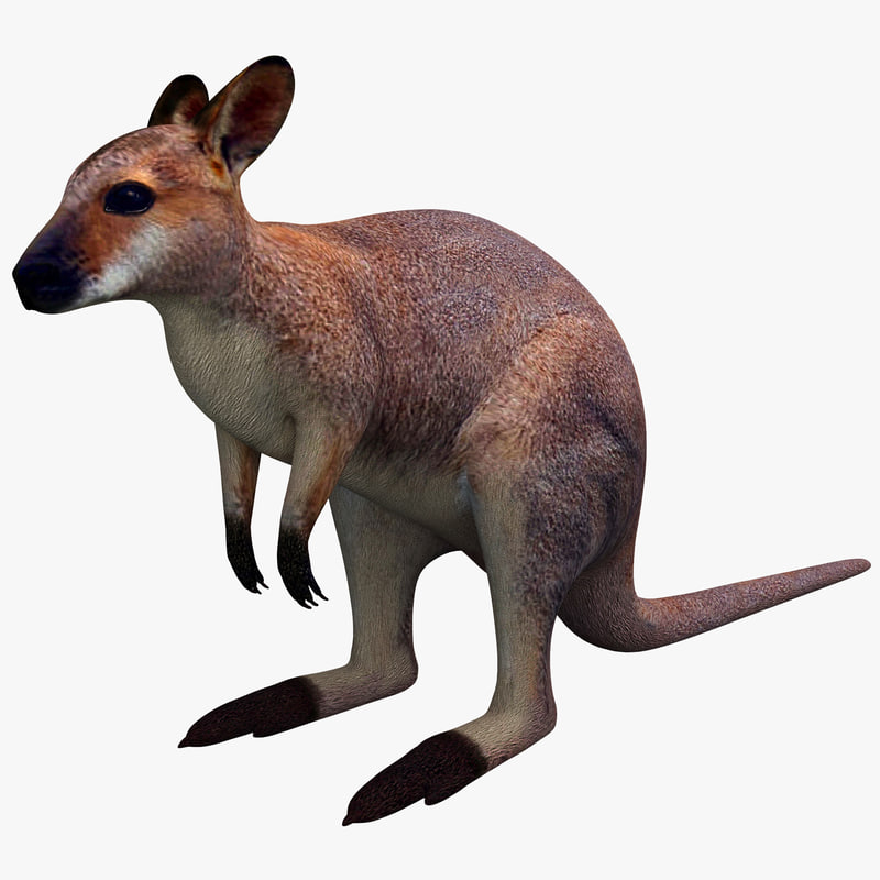 3ds max wallaby