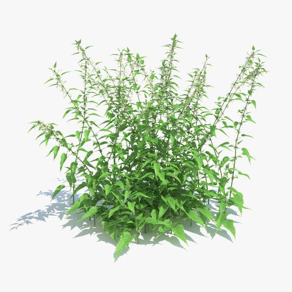 common nettle plant 3d obj