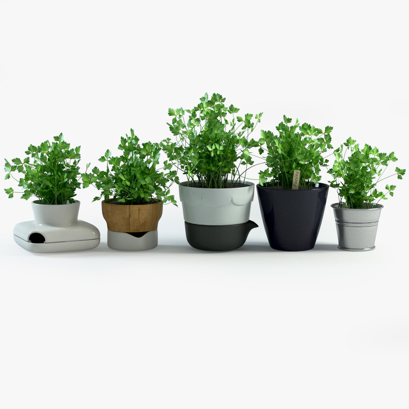 3d model parsley