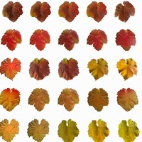 leaves 3ds