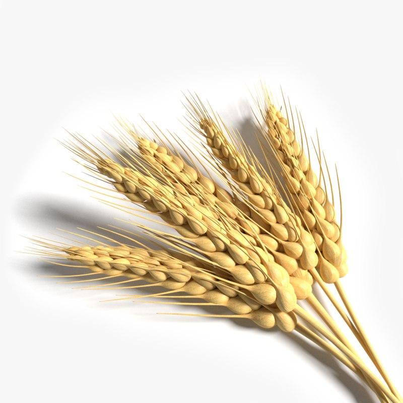 wheat 3d model