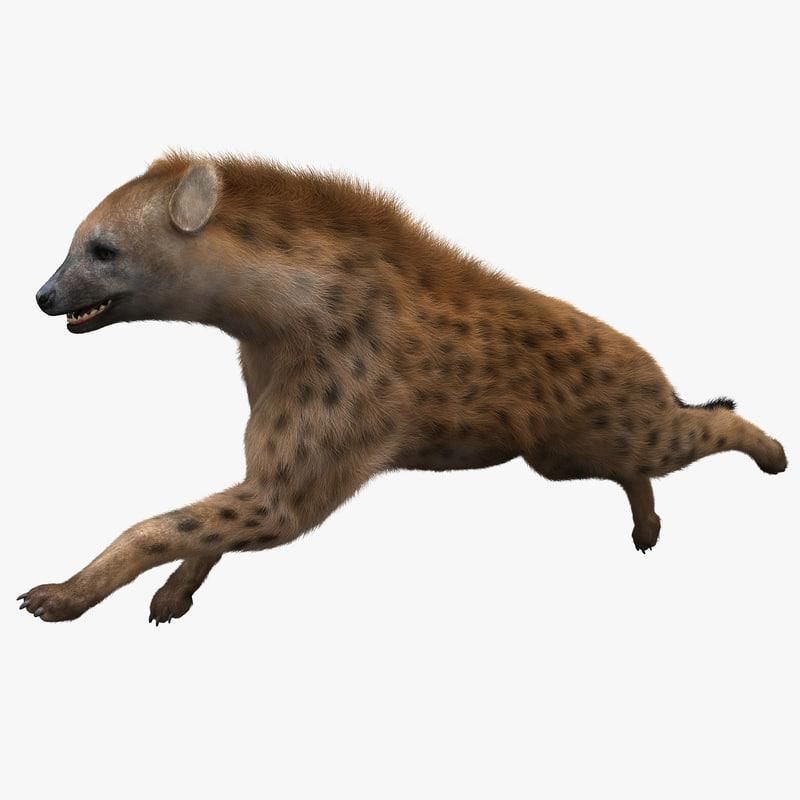 hyena pose 2 fur 3d model