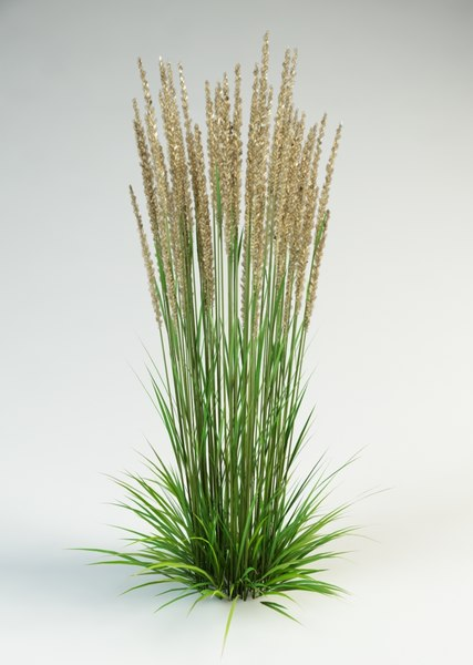 3ds max reed grass