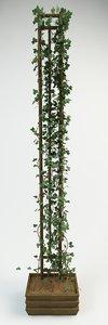 3d canarian ivy model