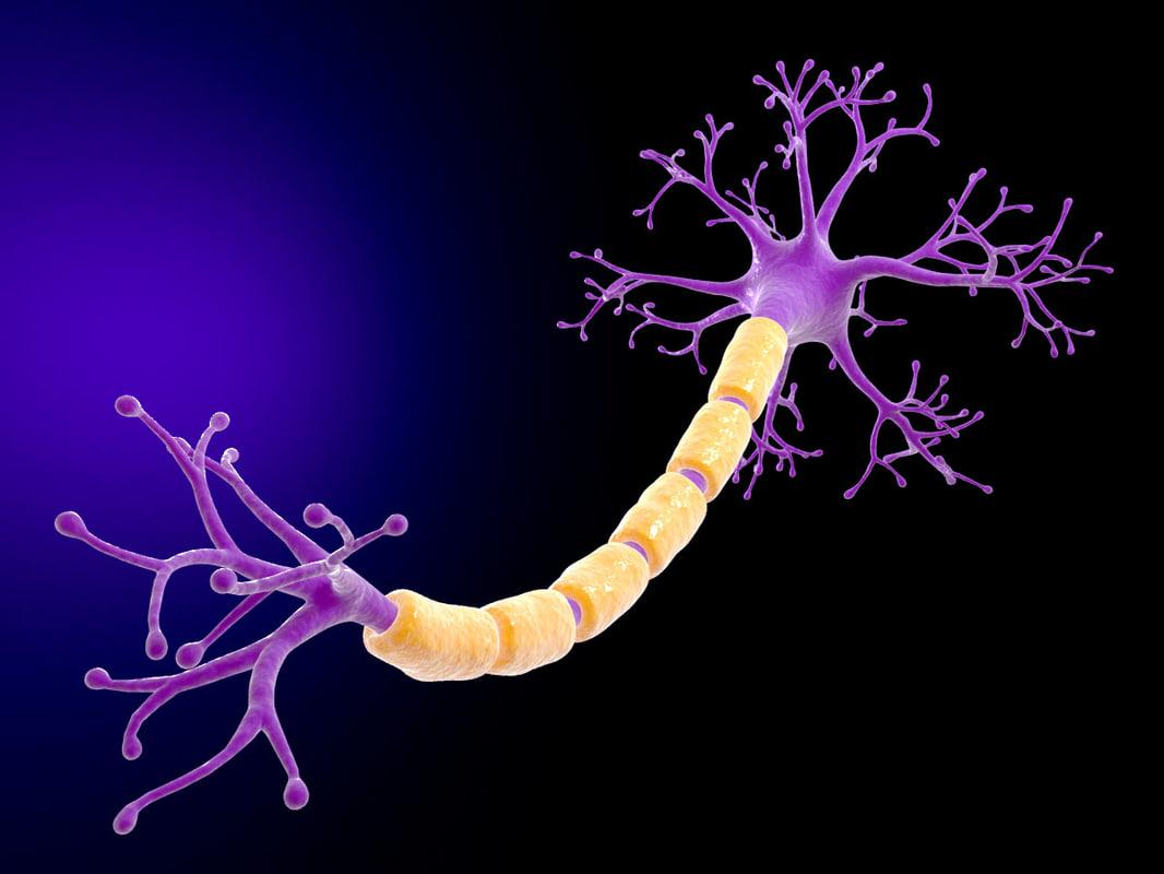 neuron 3d max