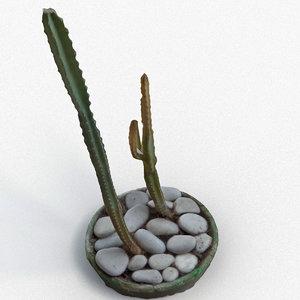 3d model of cactus interior realistic