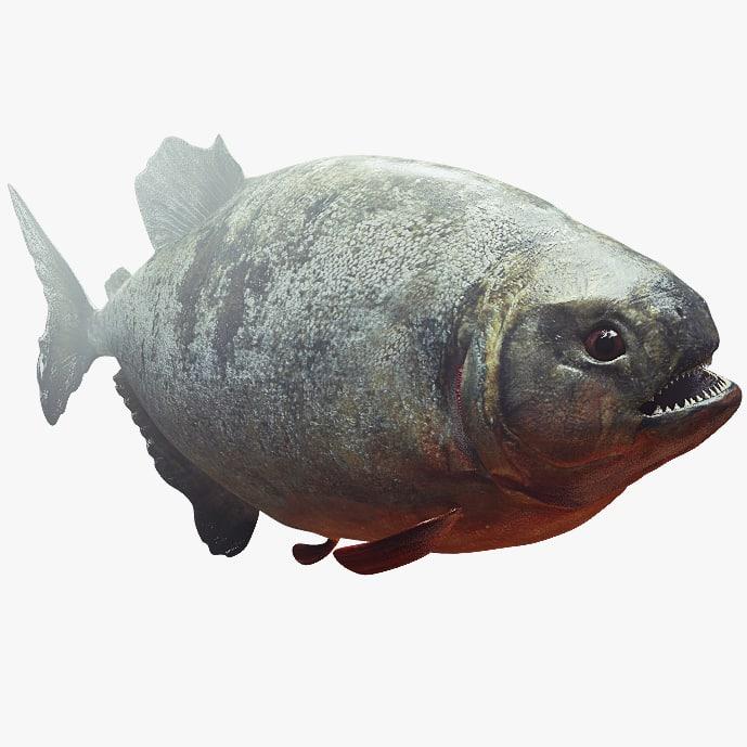 3d scary predator fish