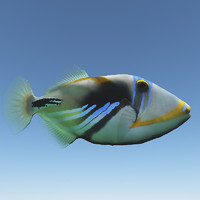 Realistic Triggerfish - Vue and obj