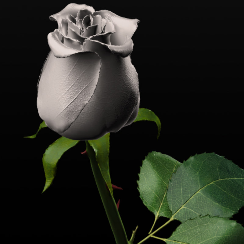 white rose obj