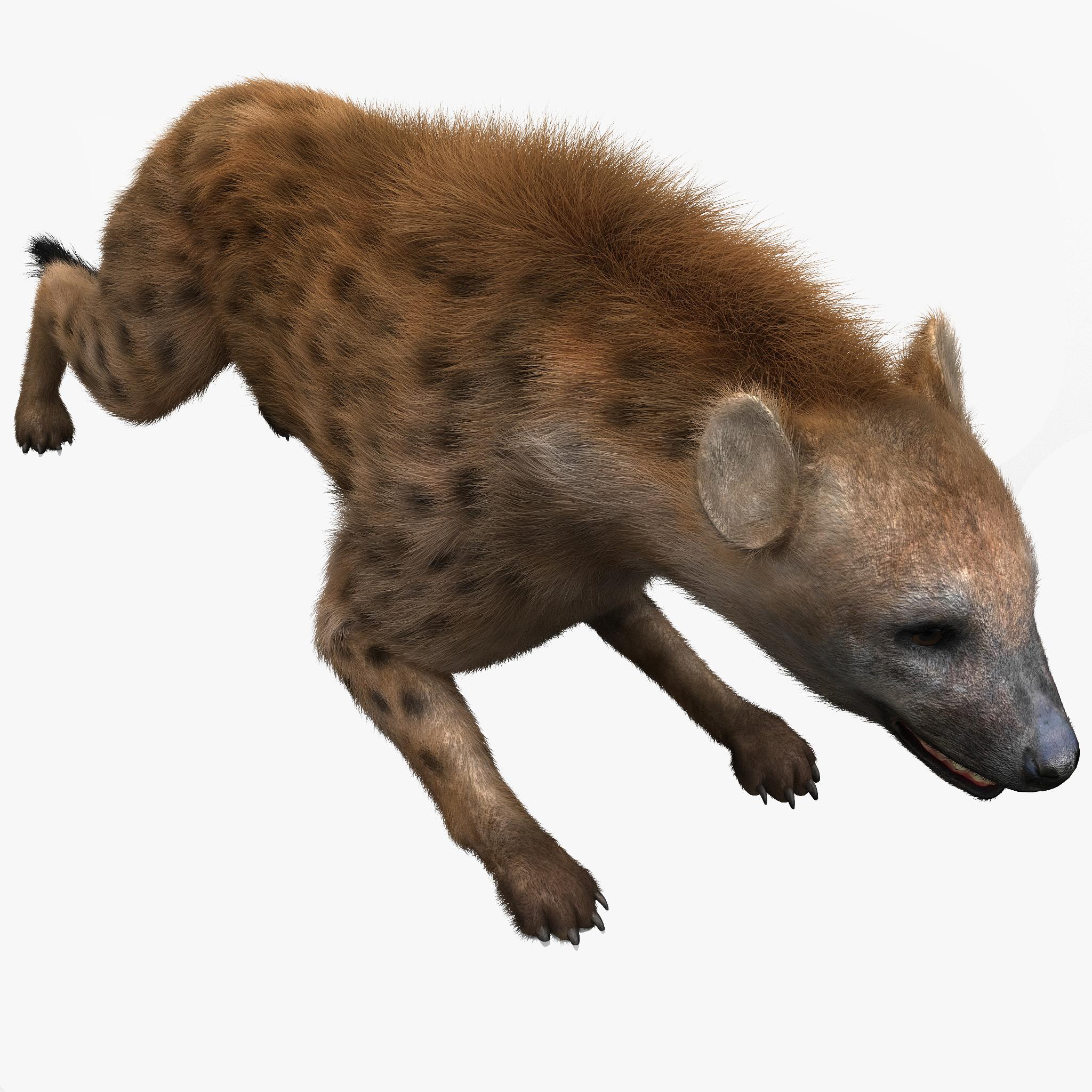Hyena 2014 Review 3d hyena pose 5...