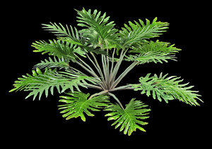 3d philodendron