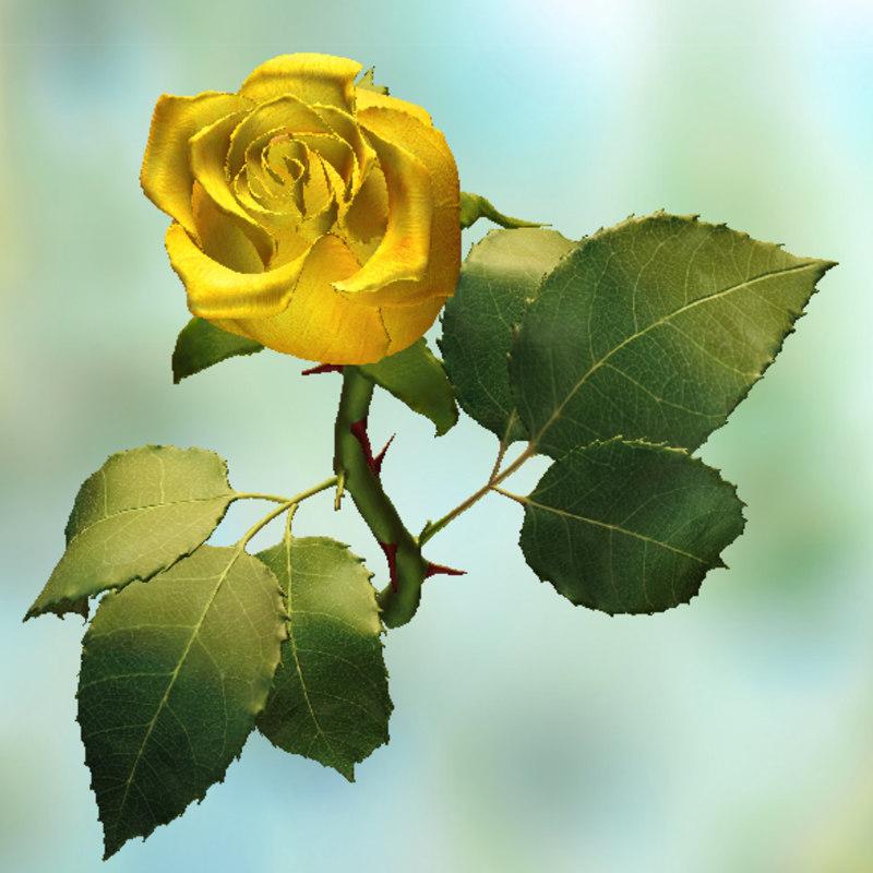 yellow rose 3d obj
